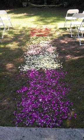 purple-white-red-walk