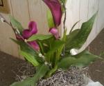 Seasonal blooming plants vary monthly