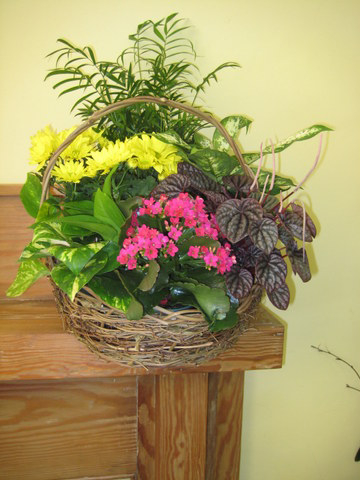 Basket of Plants fro Home or Service