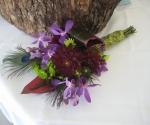 purple-peacock