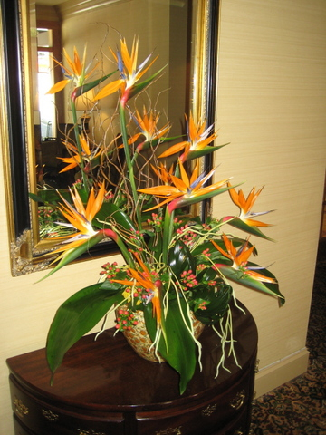 bird-of-paradise-side