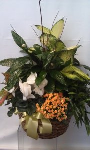 Large Plant Basket