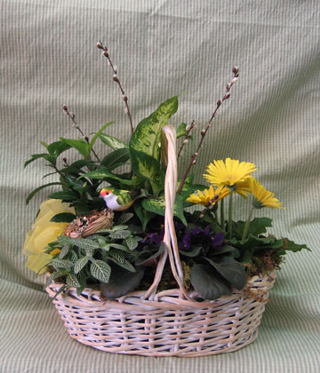 Garden basket with green and blooming plants