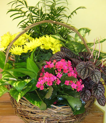 Garden basket of green and blooming plants