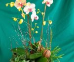 Orchid Planter $65.00