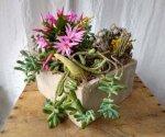 Succulent Garden $60